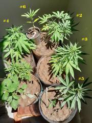 grow_02_10.jpg