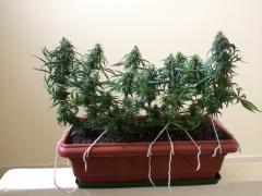 Pc Grow 6, Full Spectrum Test