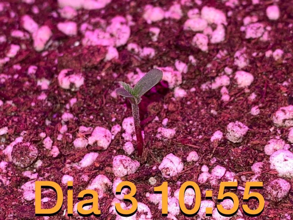 9A89BC34-D299-4F7C-B14C-23998F17F91D.jpeg