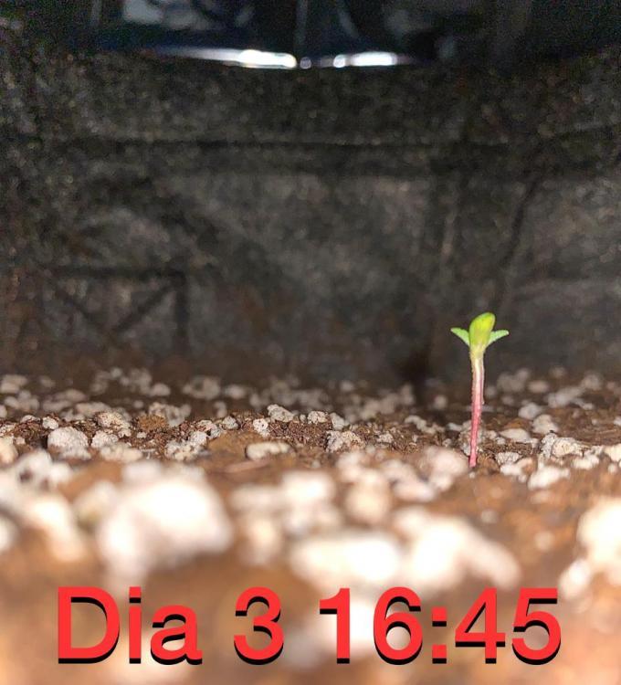 FABF1489-A0BE-4386-BA13-7AC2EDFBDD1B.jpeg