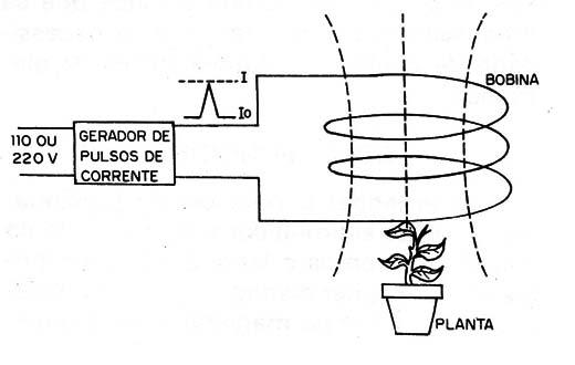 bobinaplanta.jpg