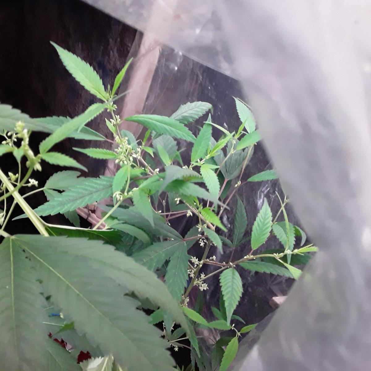Grow sacola kkkk.jpg