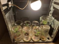 pc grow incubadora.jpg