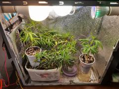 pc grow.jpg