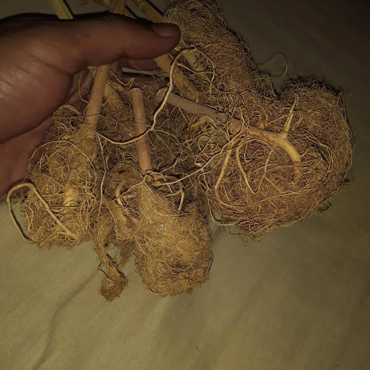 Roots balm jah....nova tite kk epicondilite.jpg