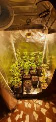 09.08 geral grow flora.jpg