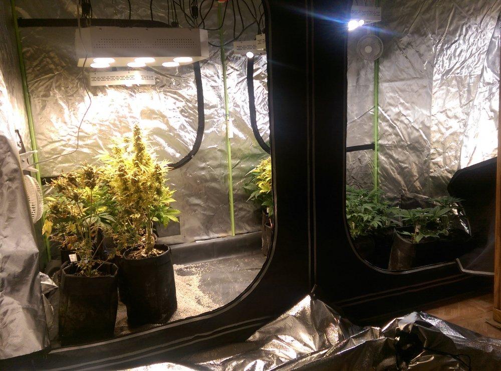 Estufas para cultivo indoor