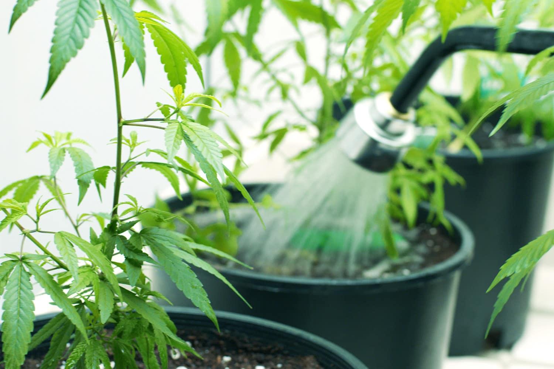 Plantas sendo regadas