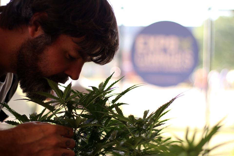 Plantas em exposicão durante a Expo Cannabis Uruguai