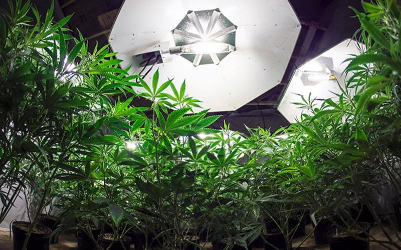 HQI - Lâmpadas para cultivar maconha