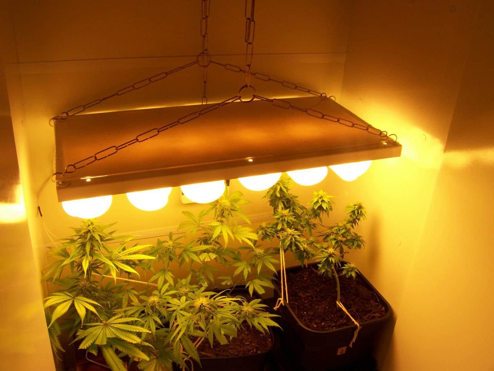 Pequeno cultivo bem iluminado