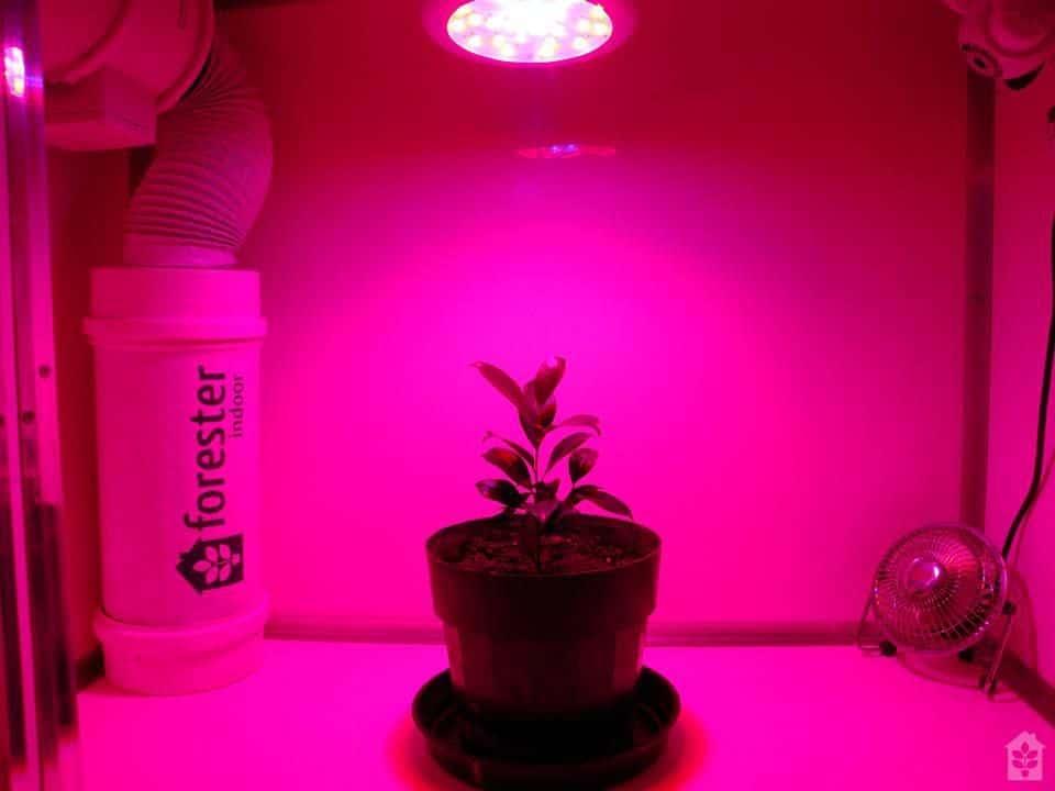 Lâmpadas de LED são ideais em um Micro Grow