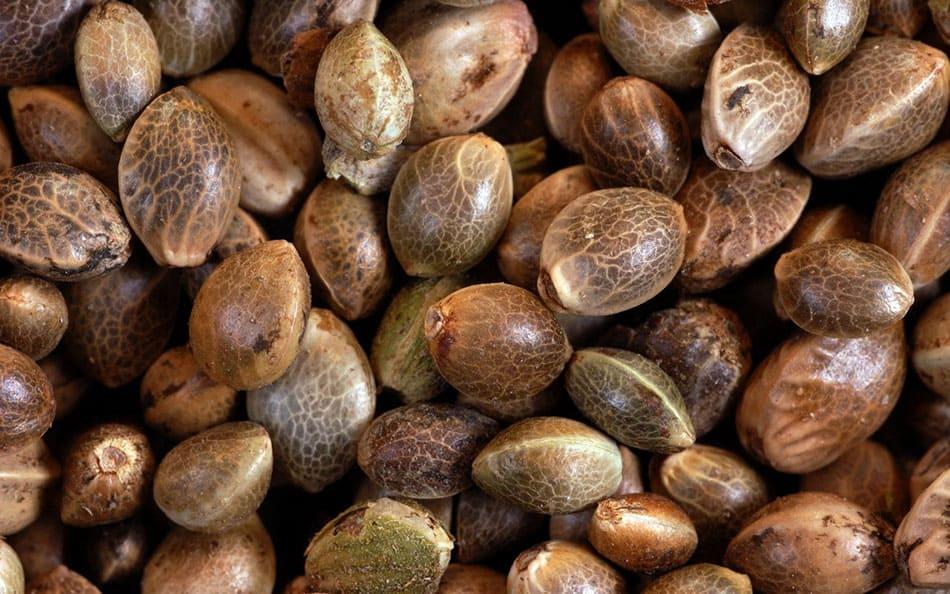 Identificando sementes de prensado boas