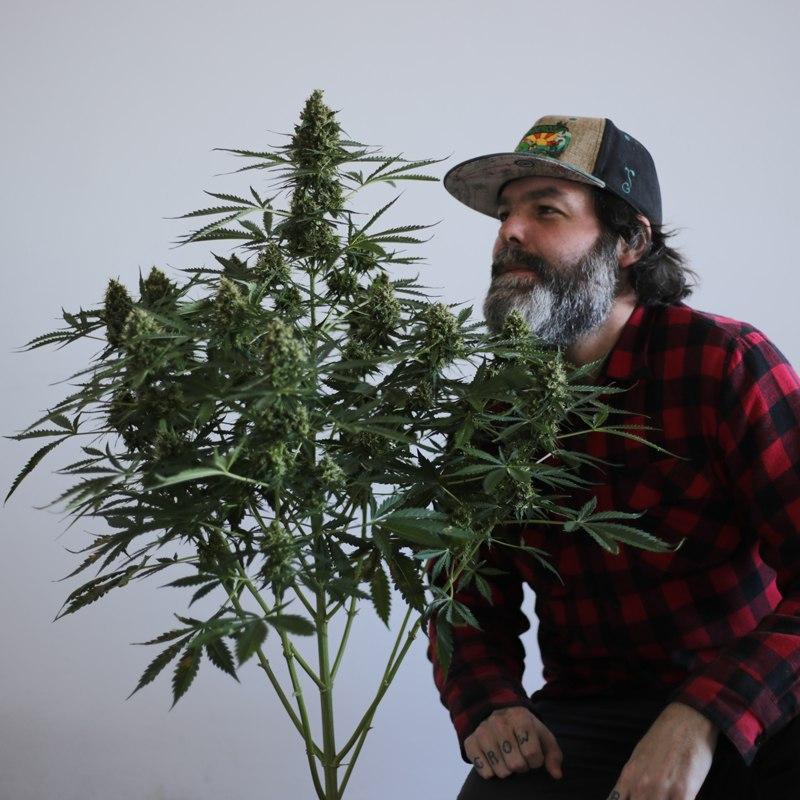 Professor do curso de cultivo de Cannabis da GRHS