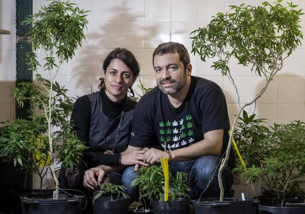 Apepi maconha cultivo
