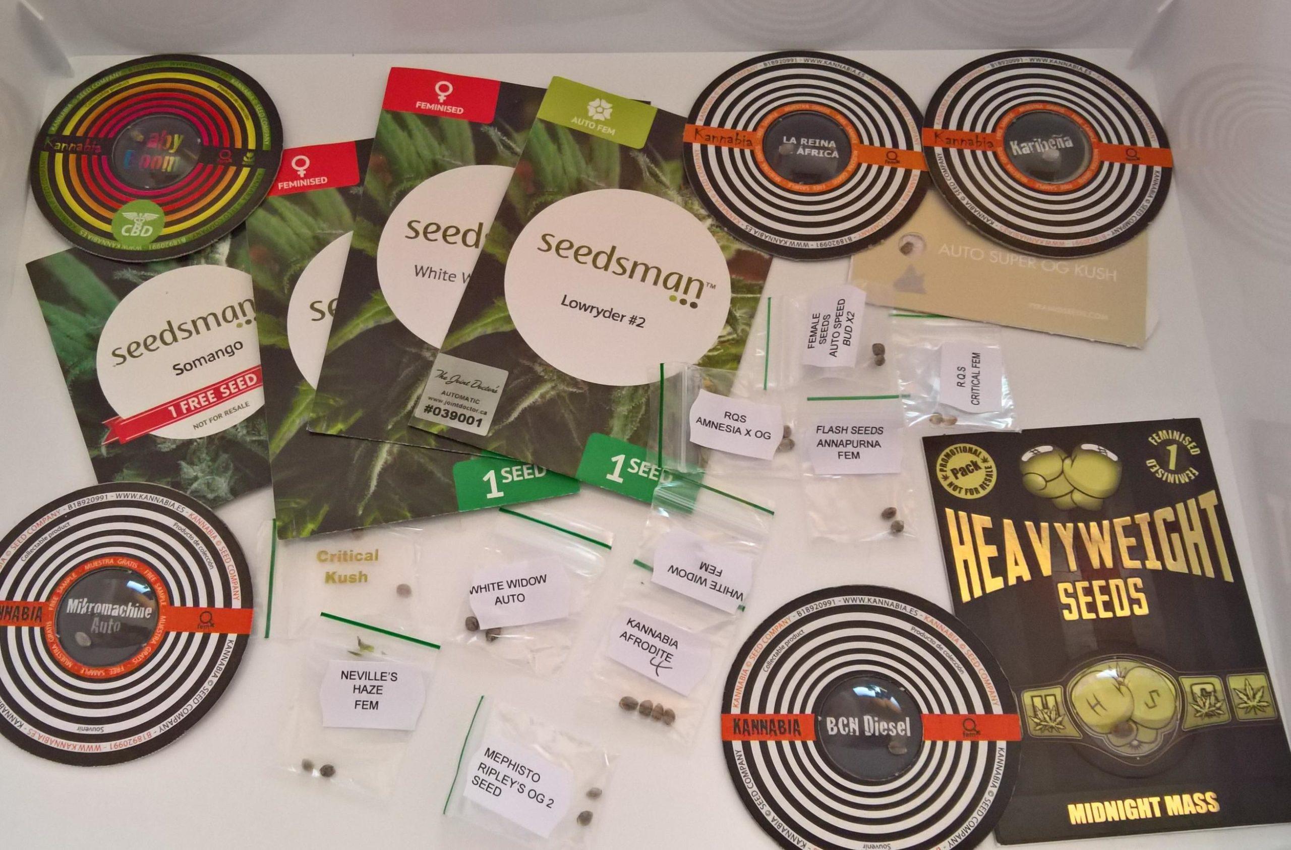 Bancos de sementes oferecem várias opções de strains - Créditos Cannabis Scaled