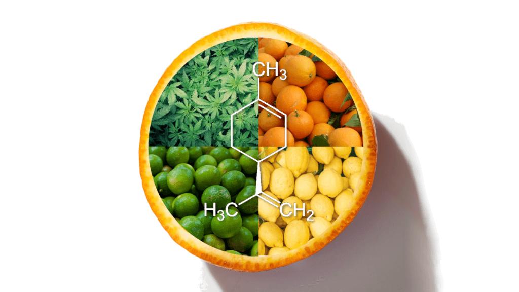 Limoneno terpeno maconha - Strain Gine (1)