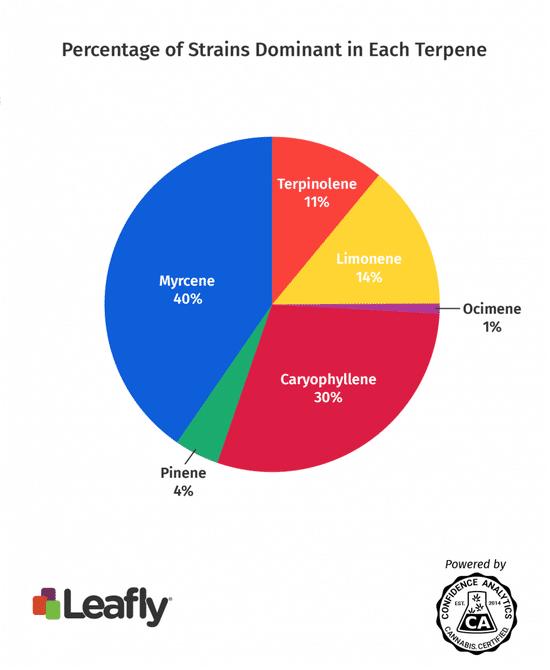 erpenos dominantes Cannabis - Leafly