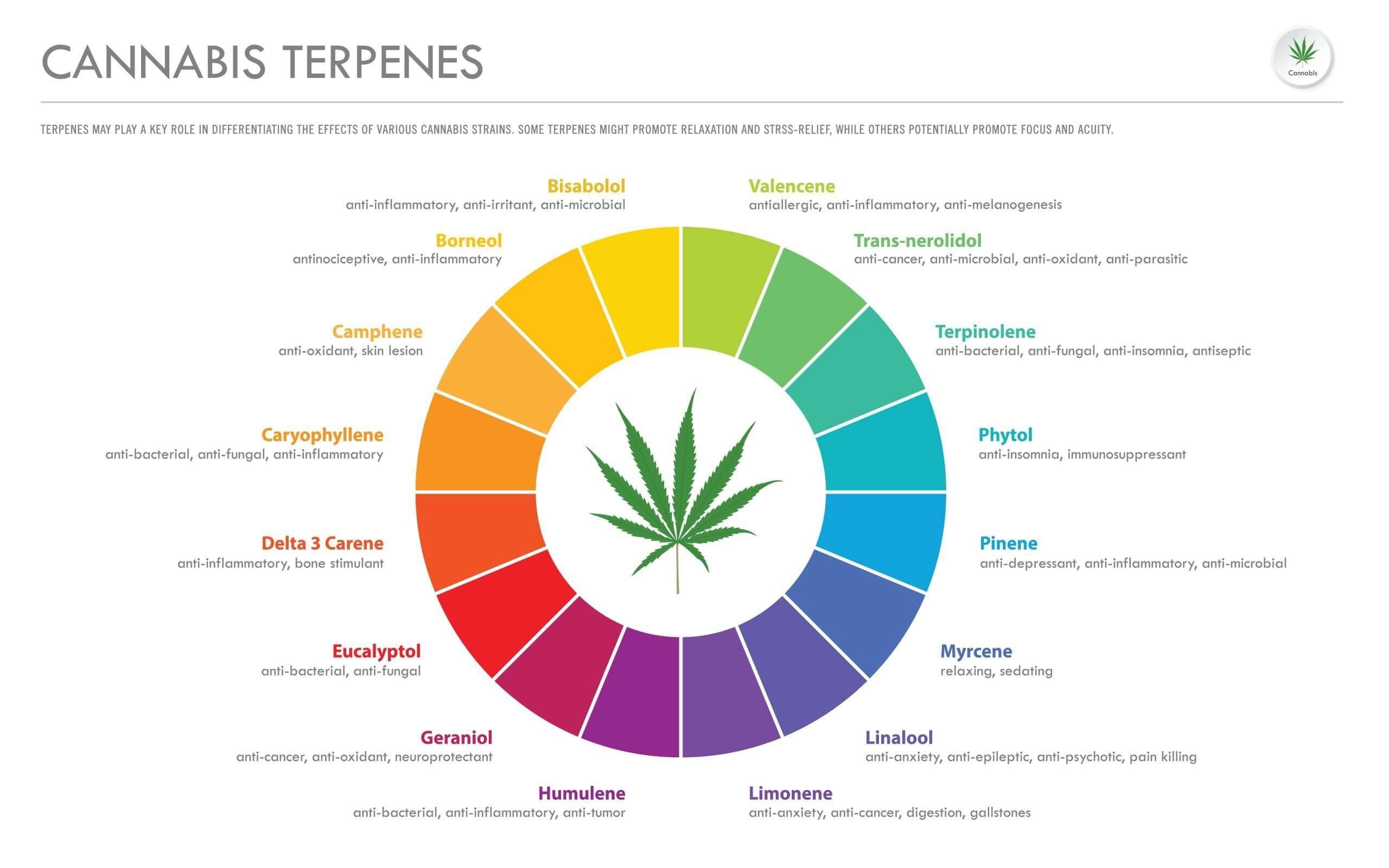 Vários tipos de terpenos e efeitos na maconha