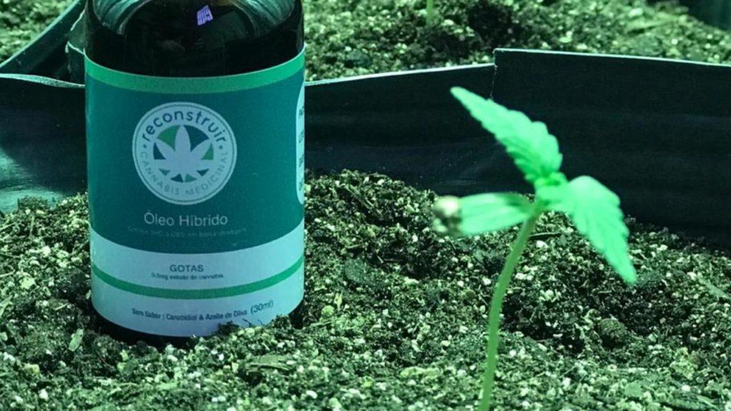 pote com rótulo da reconstruir cannabis associações canábicas ao lado de uma planta de cannabis