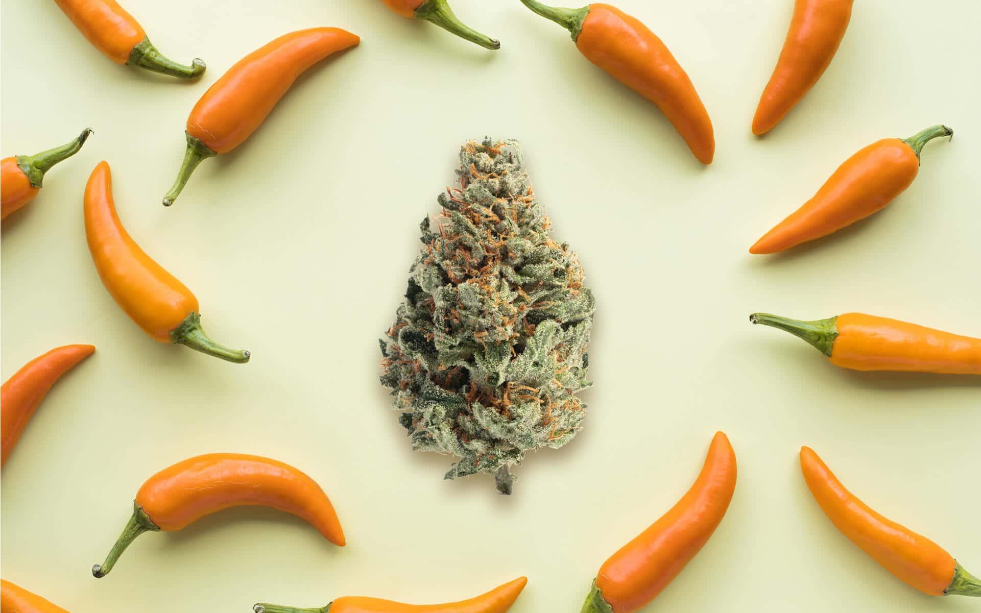 O Cariofileno está também na pimenta, no cravo, canela, manjericão e até lúpulo - Leafly