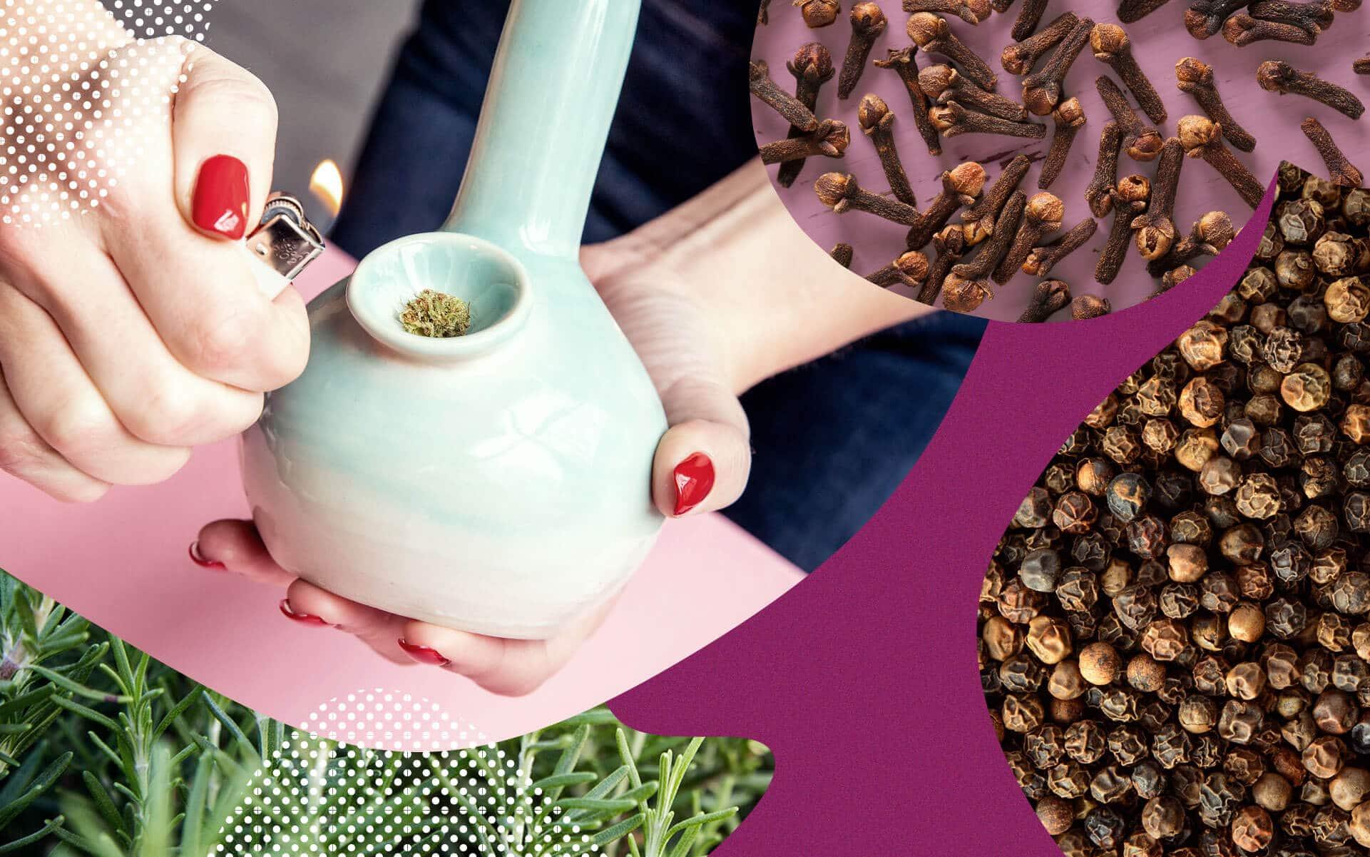 Consumo medicinal e recreativo do Cariofileno em strains de Cannabis - Leafly