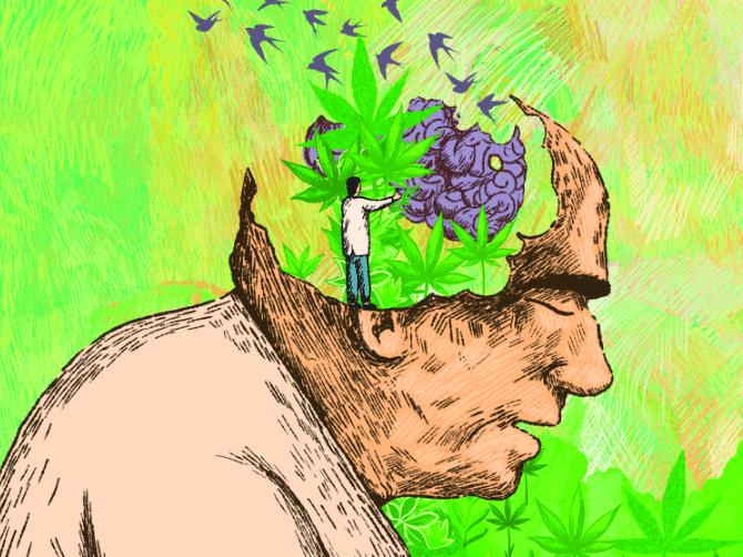 Cannabis Azheimer - Revista THC