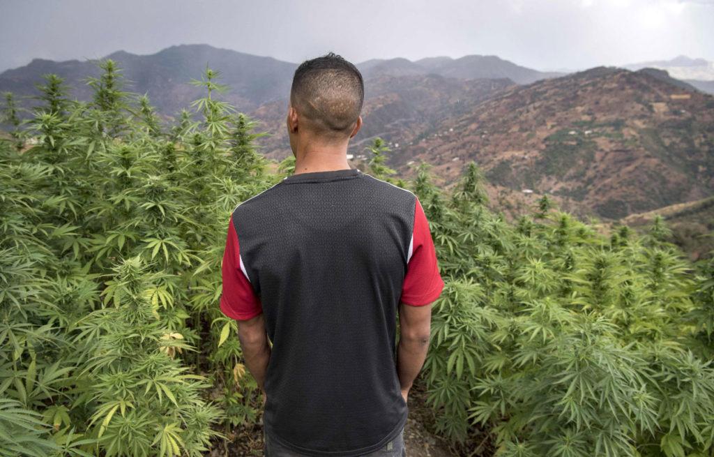 haxixe marroquino